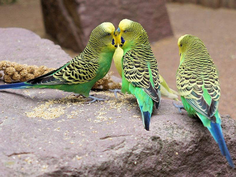 When Choosing a Mate, These Female Birds Prefer Brains Over