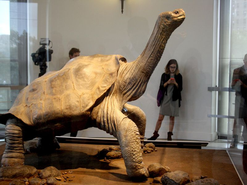 Lonesome George horizontal