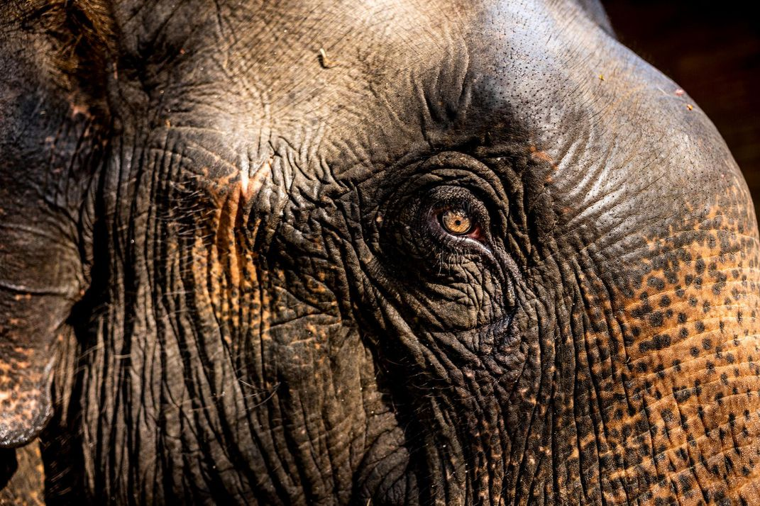 An elephant at the Myaing Hay Wun camp.