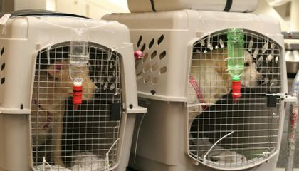 Is Taking Your Pet on an Airplane Worth the Risk?