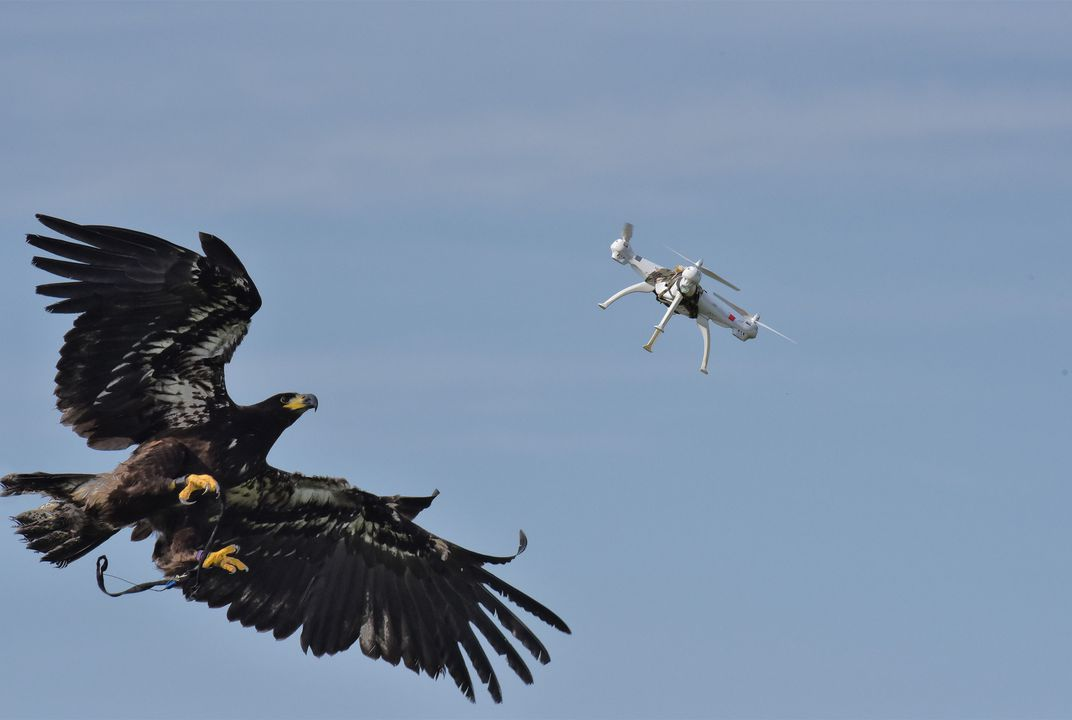 Attack Of The Drone Snatching Eagles Daily Planet Air Space Magazine