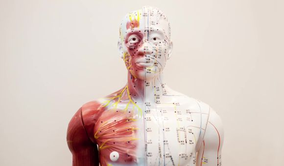 Preview thumbnail for video'Ask Smithsonian: Does Acupuncture Work?