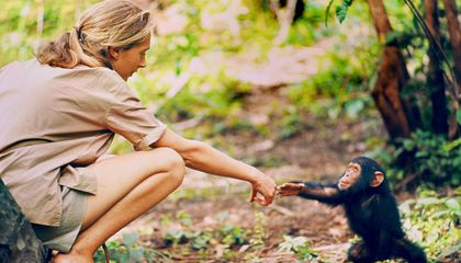 Immerse Yourself in Jane Goodall's Wondrous, Chimpanzee-Filled Life