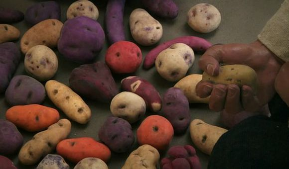 Preview thumbnail for video'Unearthing the History of the Potato