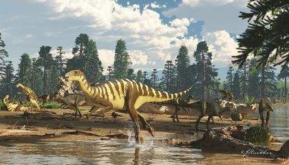 New Dinosaur Species Found in Australia Reveals a 'Lost World'