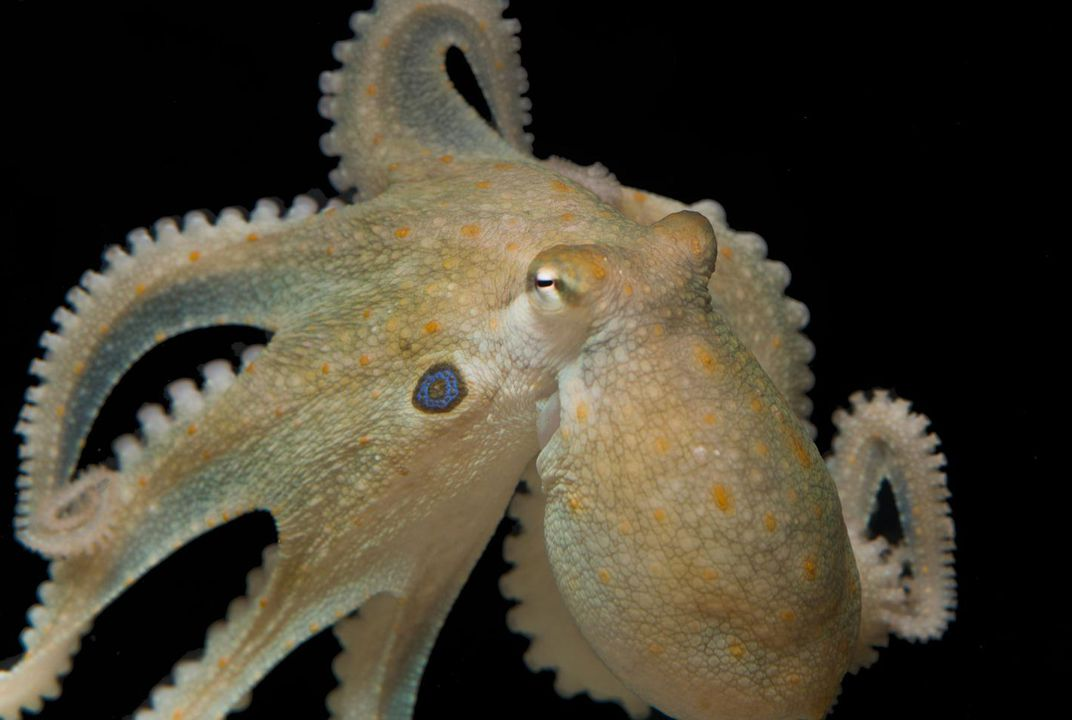 Ecstasy Turns Antisocial Octopuses Into Lovestruck Cuddle Buddies—Just Like Us