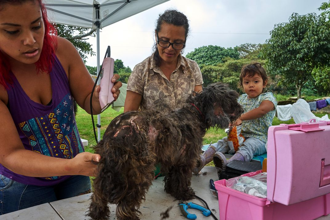 This Costa Rican Paradise Shelters Over 1,000 Stray Dogs | Travel