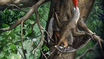 A Prehistoric Flying Creature Nicknamed 'Monkeydactyl' May Have Climbed Trees Using Opposable Thumbs