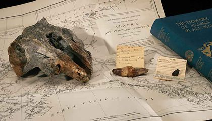 Smithsonian Researchers Uncover Extinct, Ancient River Dolphin Fossil Hiding in Their Own Collections