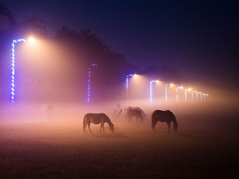 The glow from the lights paired with the silhouettes of the horses make such a beautiful yet eerie photograph. I love the leading line you used in your frame to trail our eye to the darkness at the end of the lights and create mystery about what is at the end.