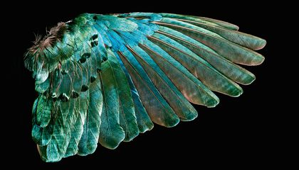 The Extravagant Beauty of Feathers