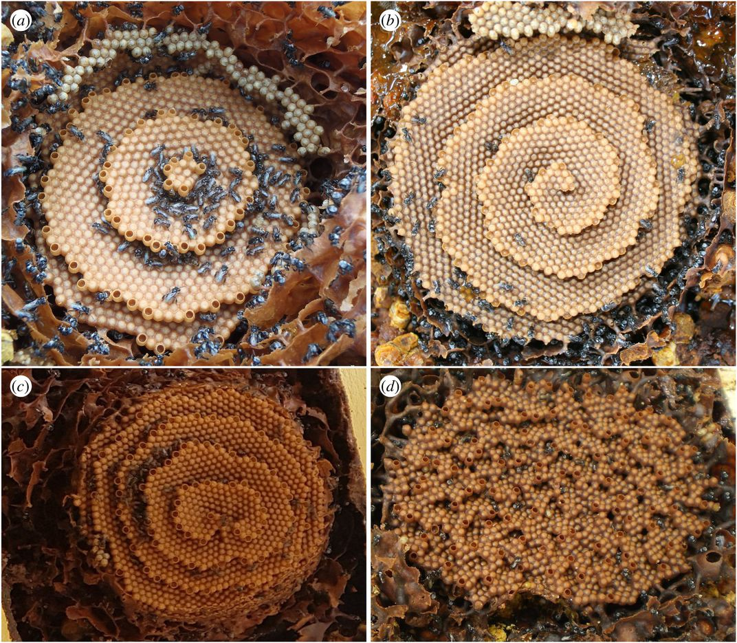 Four images of stingless bee honeycombs