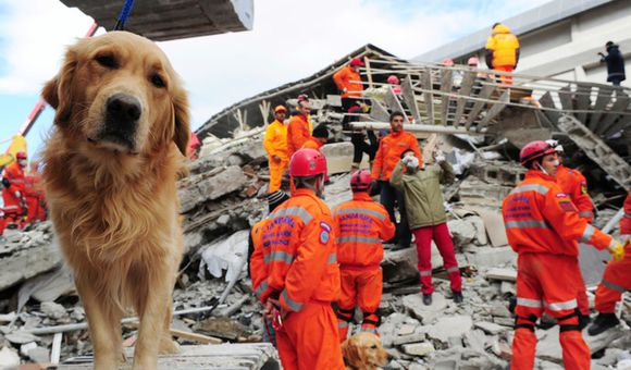 Preview thumbnail for video'Ask Smithsonian: Can Animals Predict Earthquakes and Other Natural Disasters?