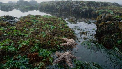 This Beer Was Brewed to Save Sea Stars