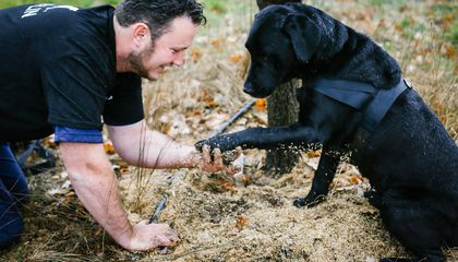 These Adorable Rescue Dogs Lead Truffle Hunting Tours in Australia's Majura Valley