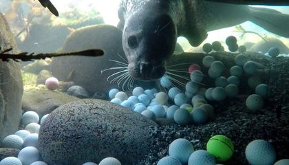 A High Schooler Discovered Thousands of Golf Balls Polluting California's Coastal Waters