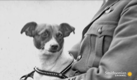 Preview thumbnail for video'The First Dog to fly to the North Pole
