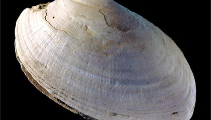 Zigzags on a Shell From Java Are the Oldest Human Engravings
