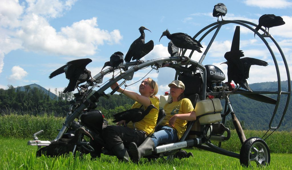 The northern bald ibis flock surround their human foster parents Stefanie Heese (left) and Daniela Trobe (right) and the microlight airplane used in the experiment.