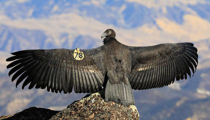 a bird standing on top of a mountain with its wings stretched out.