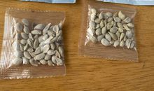 Americans Plant Mysterious Seeds Despite Government Warnings
