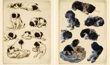 Animals in Art and At Home