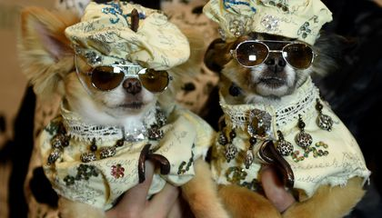 Too cool dogs?