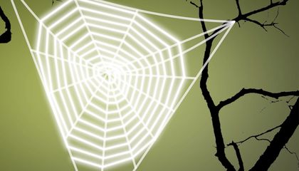 Ask Smithsonian: How Do Spiders Make Their Webs?
