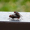 I caught these flies celebrating one lovely day. They didn't seem bothered by me. Oddly enough, this was taken using an iPhone.