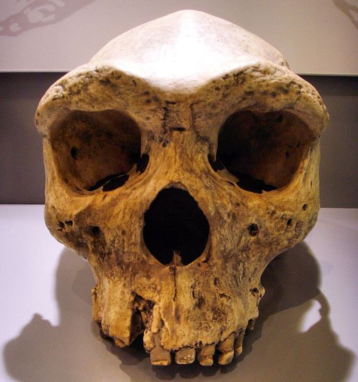 In 1921, a miner found Kabwe 1, also called the Broken Hill Skull.