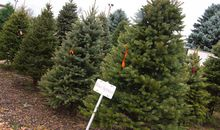 Your Christmas Tree Helps Fight Climate Change