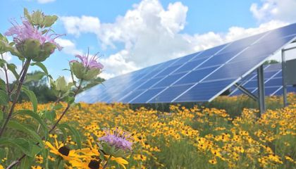 Solar Power and Honey Bees Make a Sweet Combo in Minnesota
