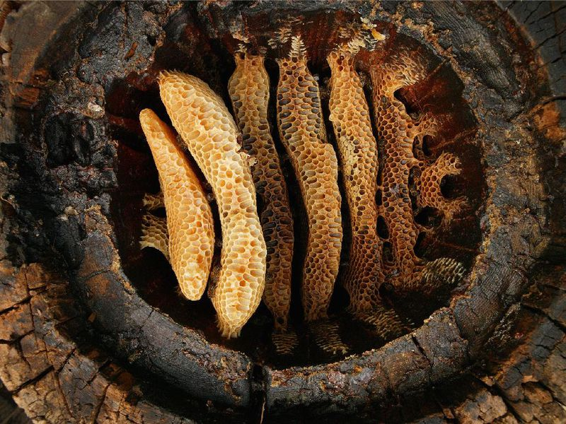 Our Ancient Ancestors Probably Loved Honey Too