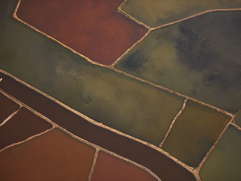 Micro-organisms give these salt ponds bright colors ranging from blue-green to deep red-magenta, depending on the salinity and season, Spain. Numerous flamingos are visible throughout the image as tiny dots. Aerial image (photographed from a plane).