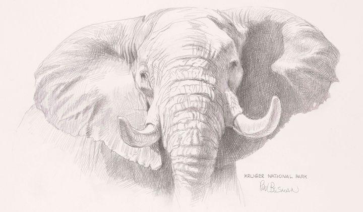 The Complicated Human and Elephant Relationship