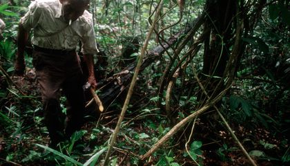 Amazonian Hallucinogen Could Be an Antidepressant