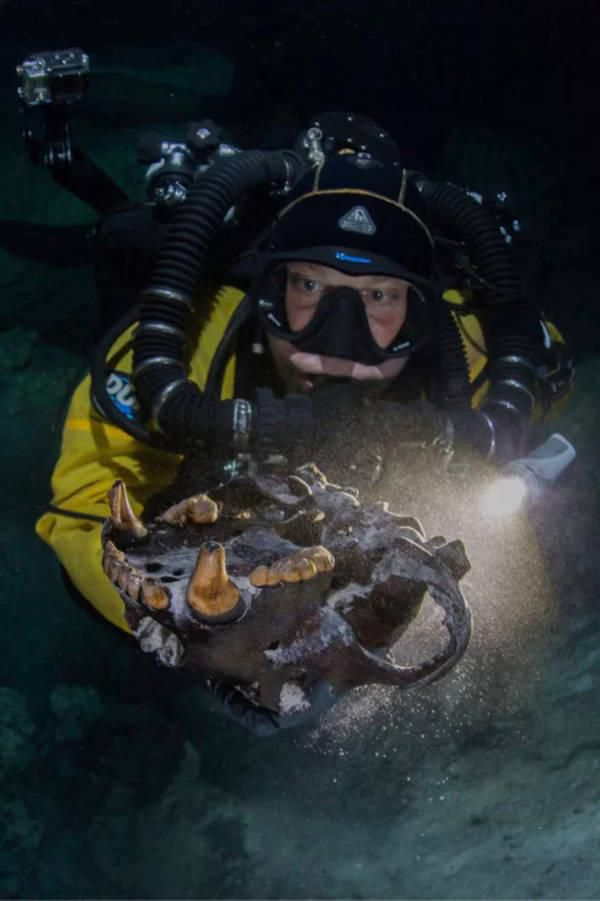 diver-with-arcotherium-skull.jpg