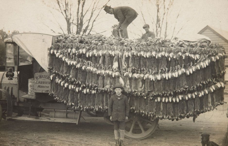 A man stands in front of a truck load of dead rabbits during the rabbit plague in Australia in 1930