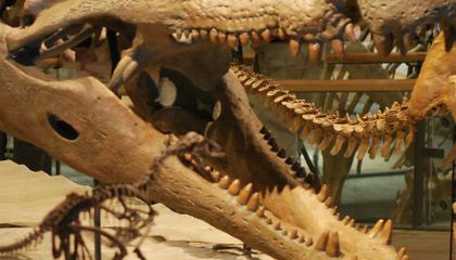 What Scared Dinosaurs? The Terror Croc