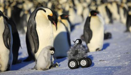 Rovers Disguised as Baby Penguins Can Quietly Infiltrate Penguin Colonies