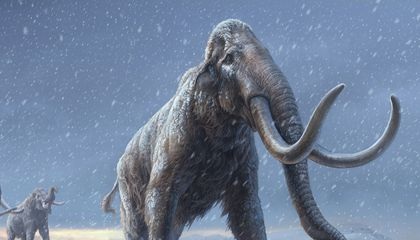 Oldest DNA Sequenced Yet Comes From Million-Year-Old Mammoths