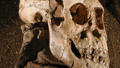 Fossilized Shoulder Reveals Early Hominids Climbed Trees