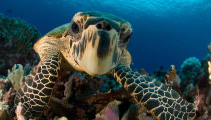 New Study Offers Glimmer of Hope for Sea Turtles