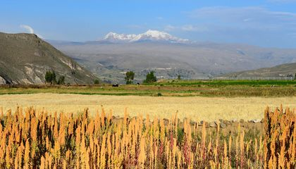 Don't Worry: Eating Quinoa Doesn't Hurt Peruvian Farmers