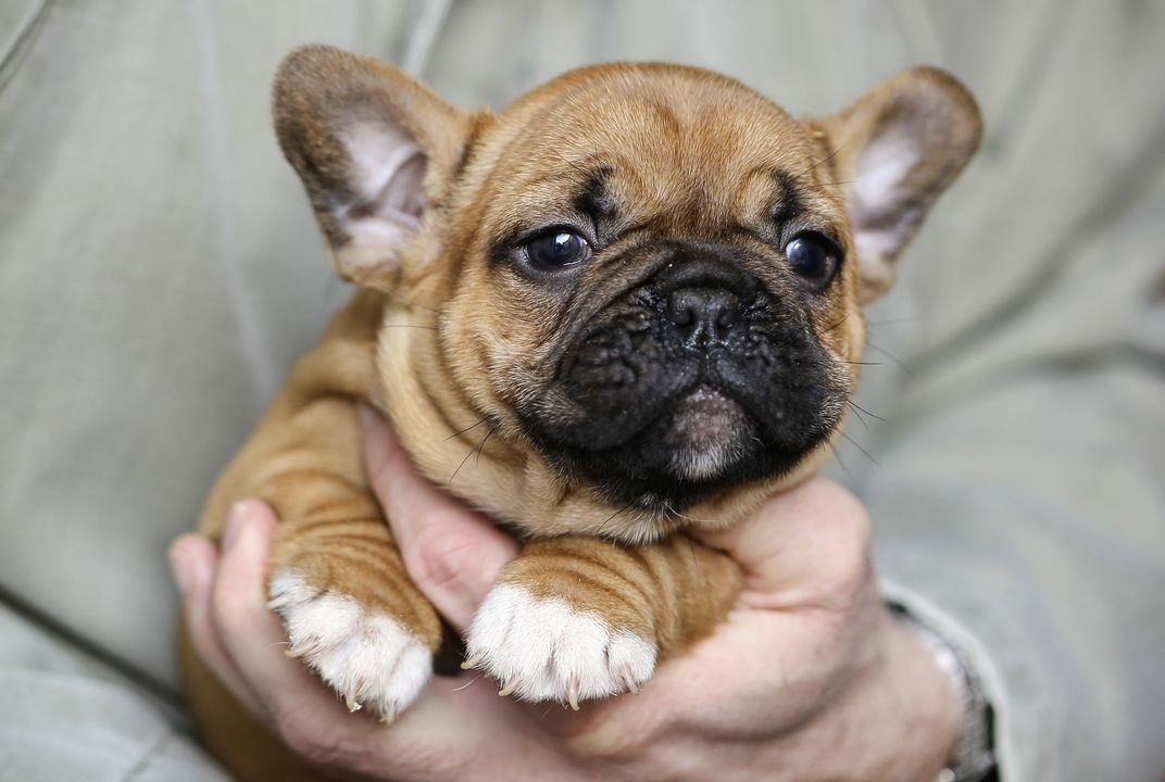 Small Cute Smart Dog Breeds