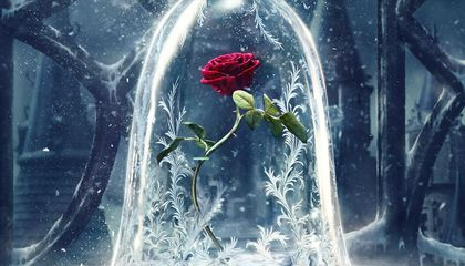 The Beast's Enchanted Rose Lasted a Decade. How Long Can a Real One Last?
