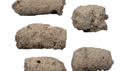 Artificial Intelligence Gives Researchers the Scoop on Ancient Poop