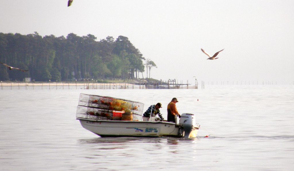 Off the fishing town of Reedville, crabbers check their traps.
