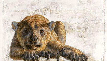 How a Changing Climate May Have Killed Off the Marsupial Lion