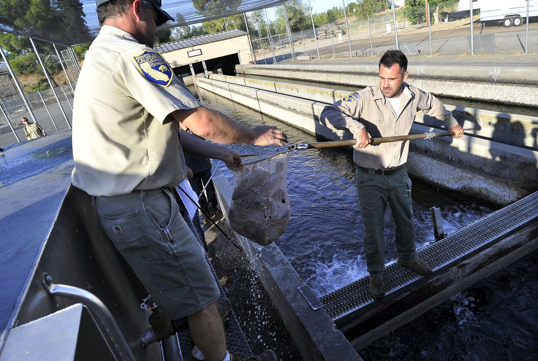 California drought forces trout to travel by truck